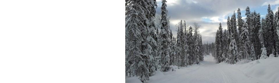 Winter near Smithers